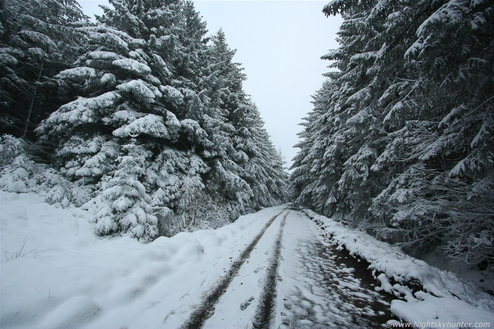 Glenshane Forest Snow
